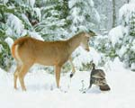 Whitetail Deer and Turkey Picture by Wildlife Photo Agency Photographer Richard Mousel